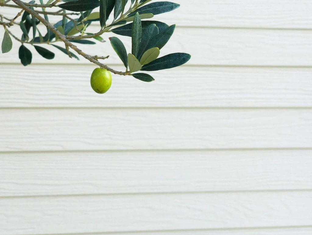 サイディング 木の実