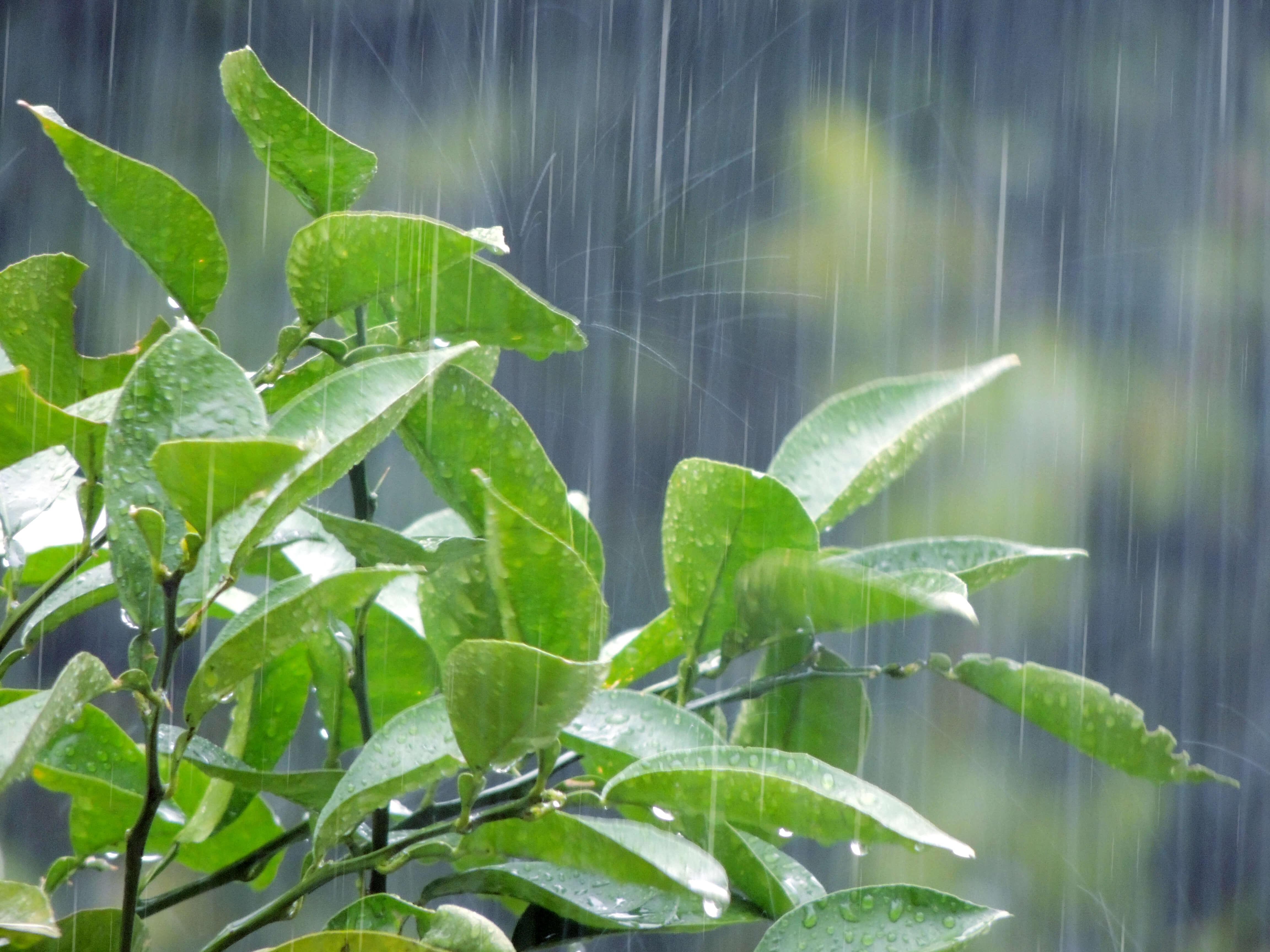 外壁塗装 雨の日