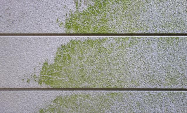 屋根塗装 コケが生えた外壁