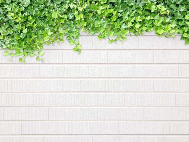 植物 白い壁