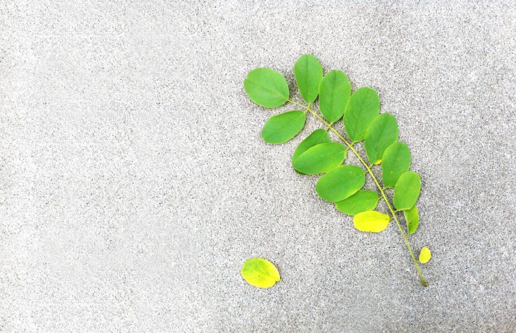 コンクリート 床 植物