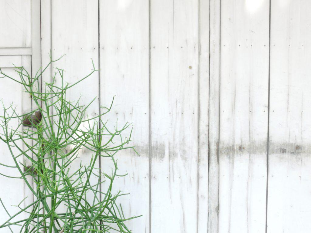 白い壁 植物